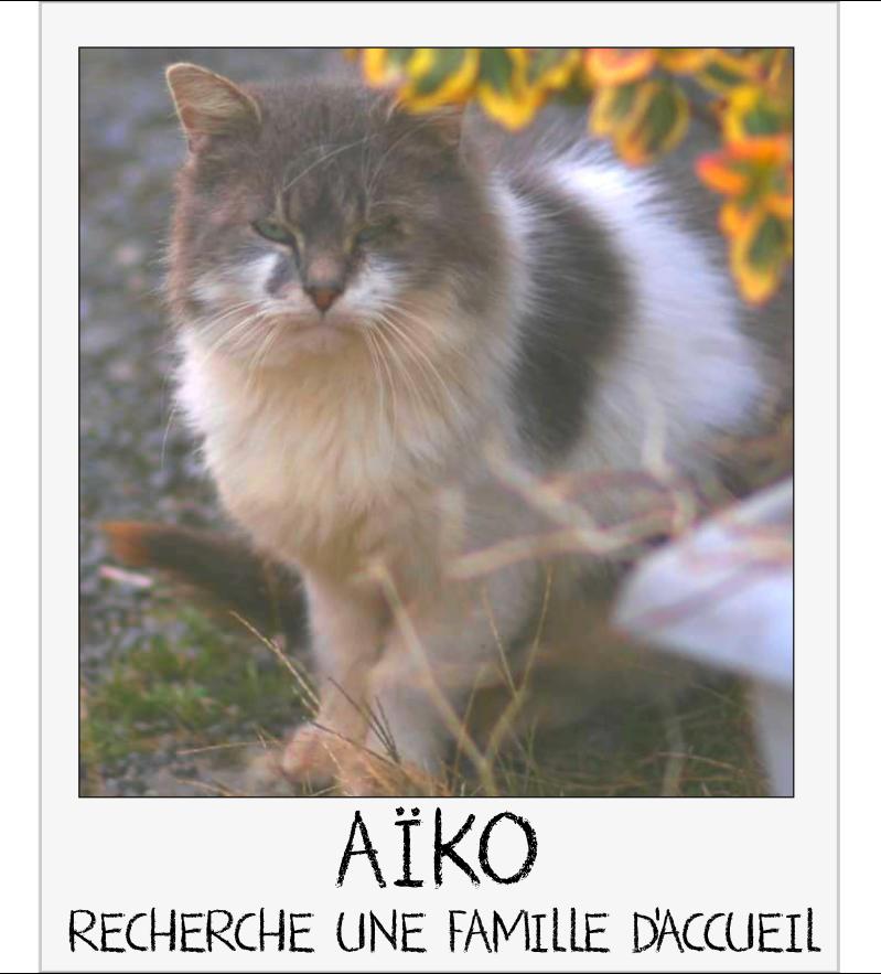 MAISON DE LA VIEILLE DAME Aiko_c11