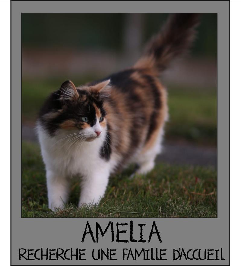 MAISON DE LA VIEILLE DAME Amelia10