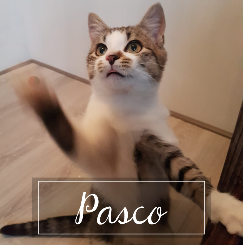 PASCO Bitmap17