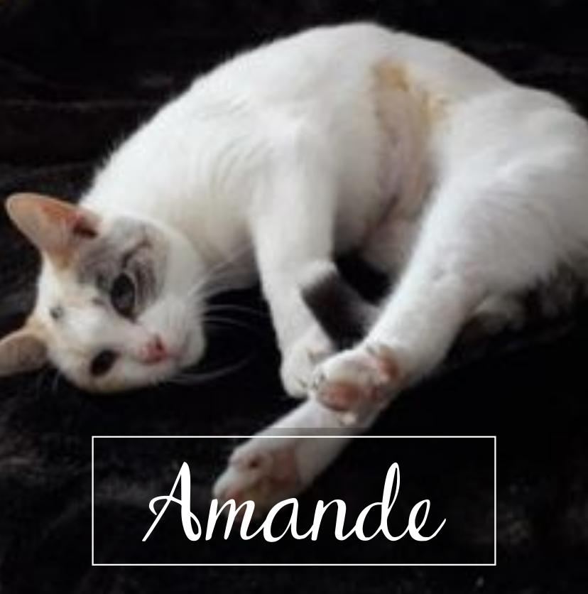 AMANDE Bitmap19