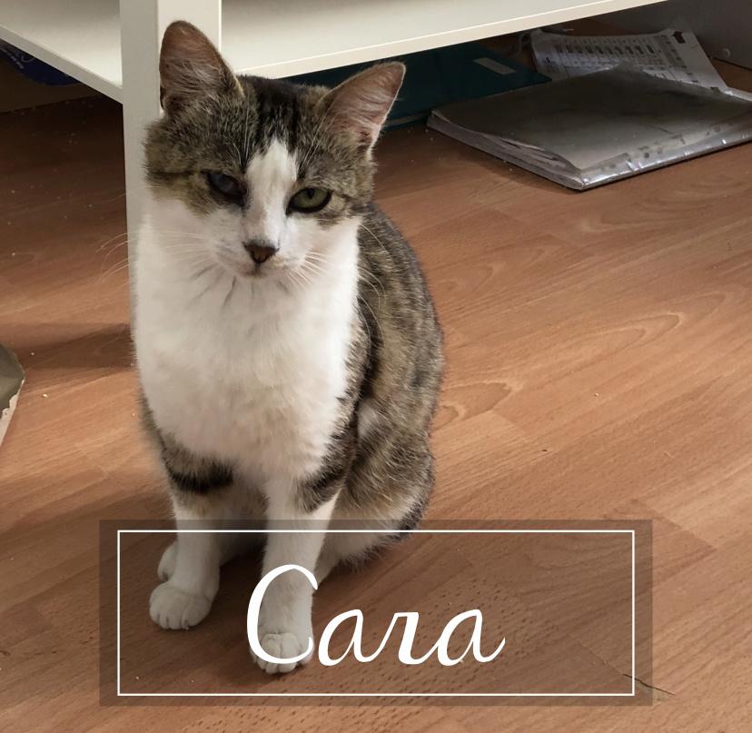 CARA Cara1910