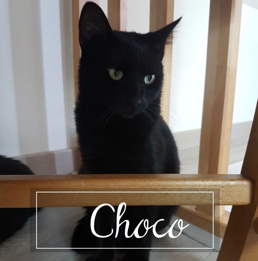 CHOCO Choco210