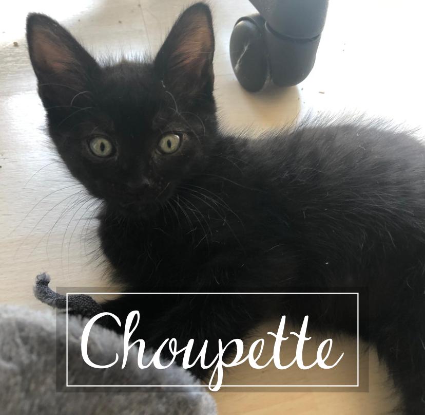 LA CHATVERNE  Choupe10