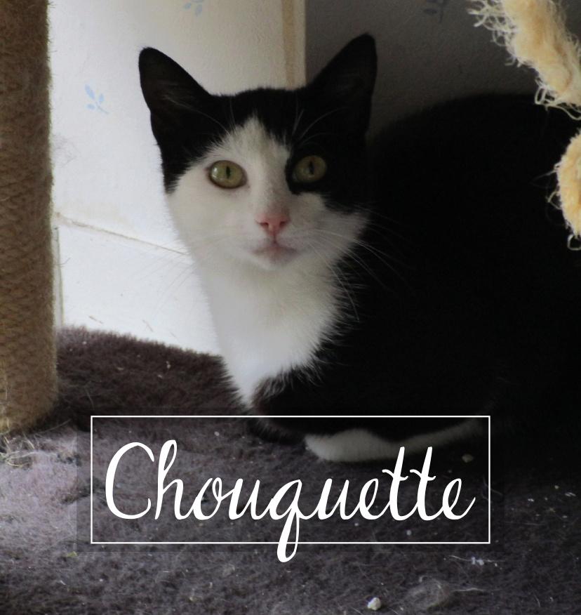 CHOUQUETTE Chouqu10