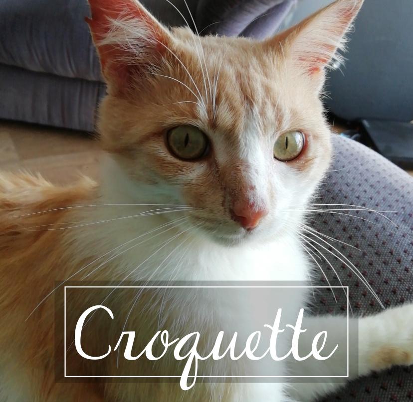 CROQUETTE Croque10