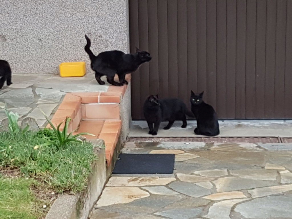 CATS IN BLACK F383c210