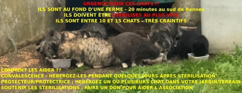AU FOND DE LA FERME - Page 2 Facebo10