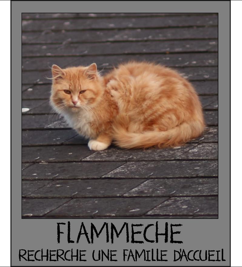 MAISON DE LA VIEILLE DAME Flamme10