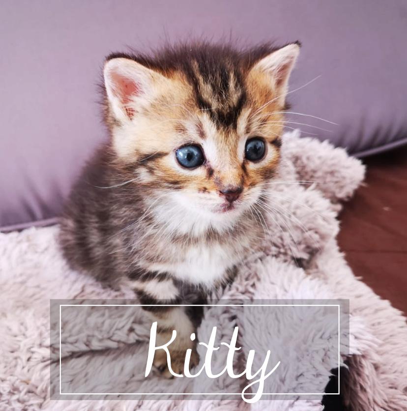 KITTY Kitty110