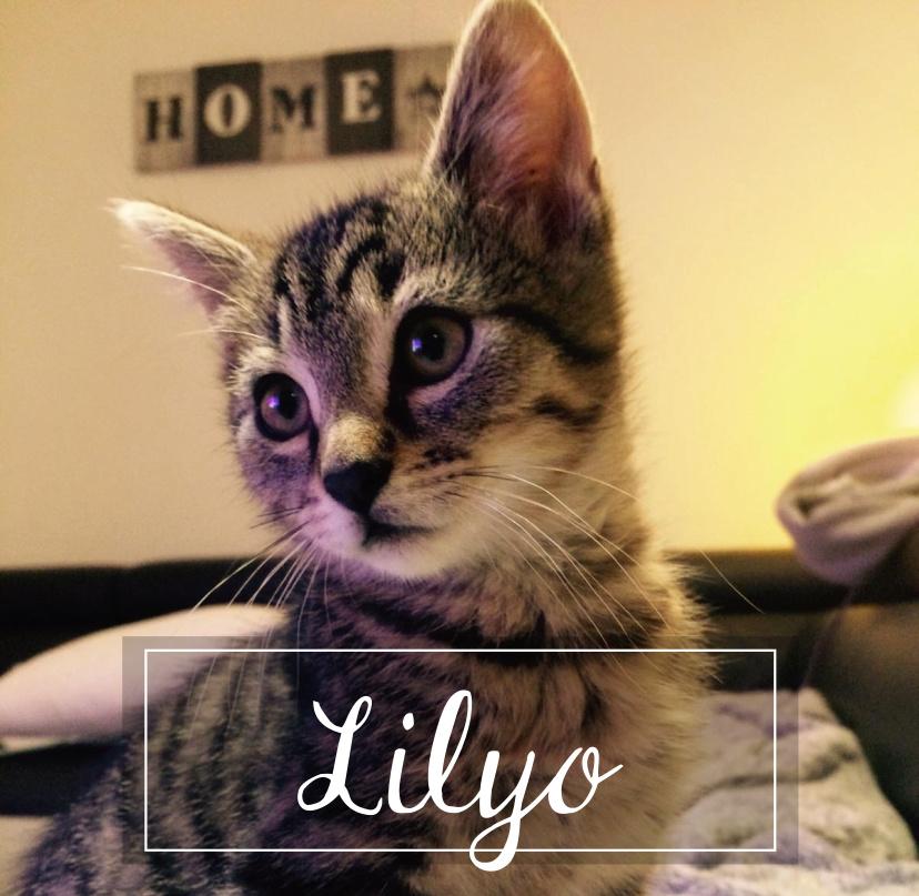 MAISON DE LA VIEILLE DAME Lilyo110