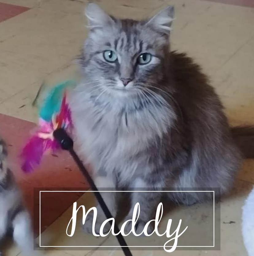 MADDY Maddy10