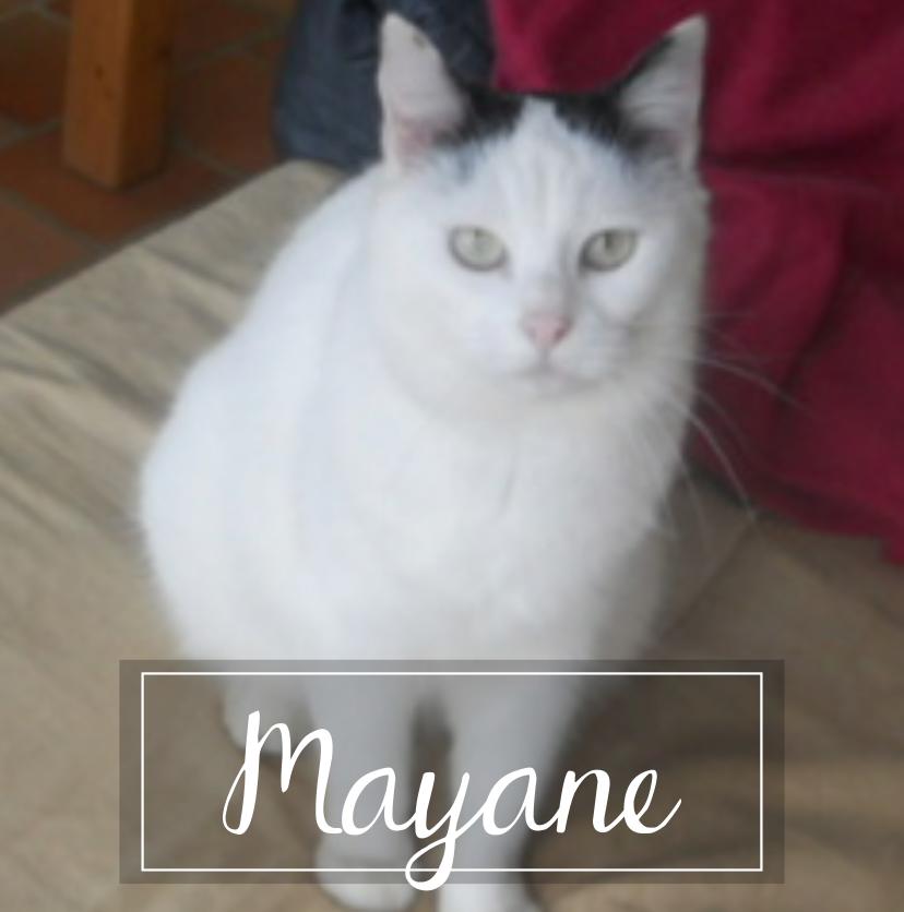 MAYANE Mayane10