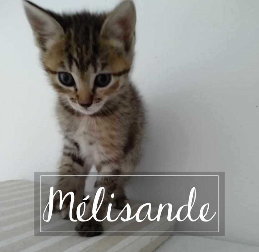 MELISANDE Melisa10