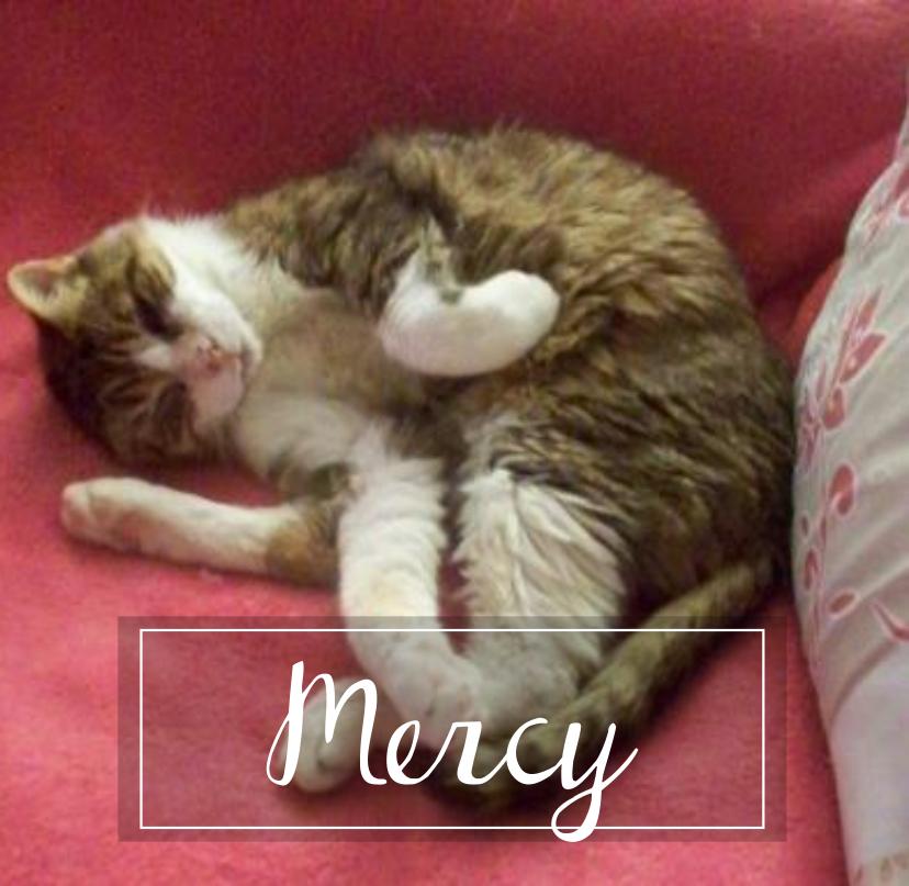 MERCY  Mercy110