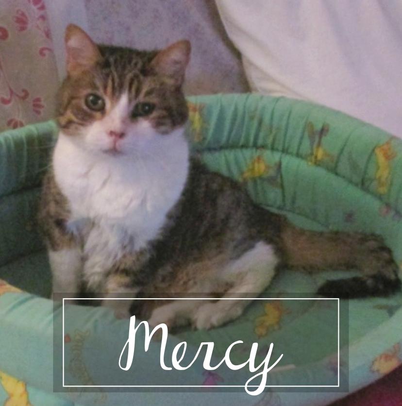 MERCY  - Page 3 Mercy111