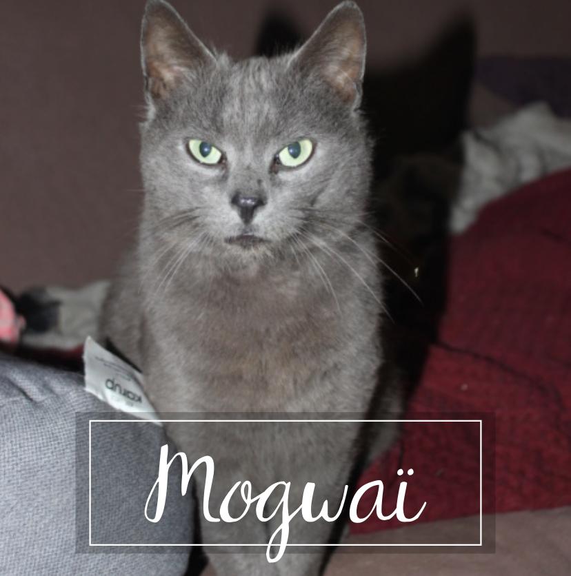 MOGWAI Mogwai10