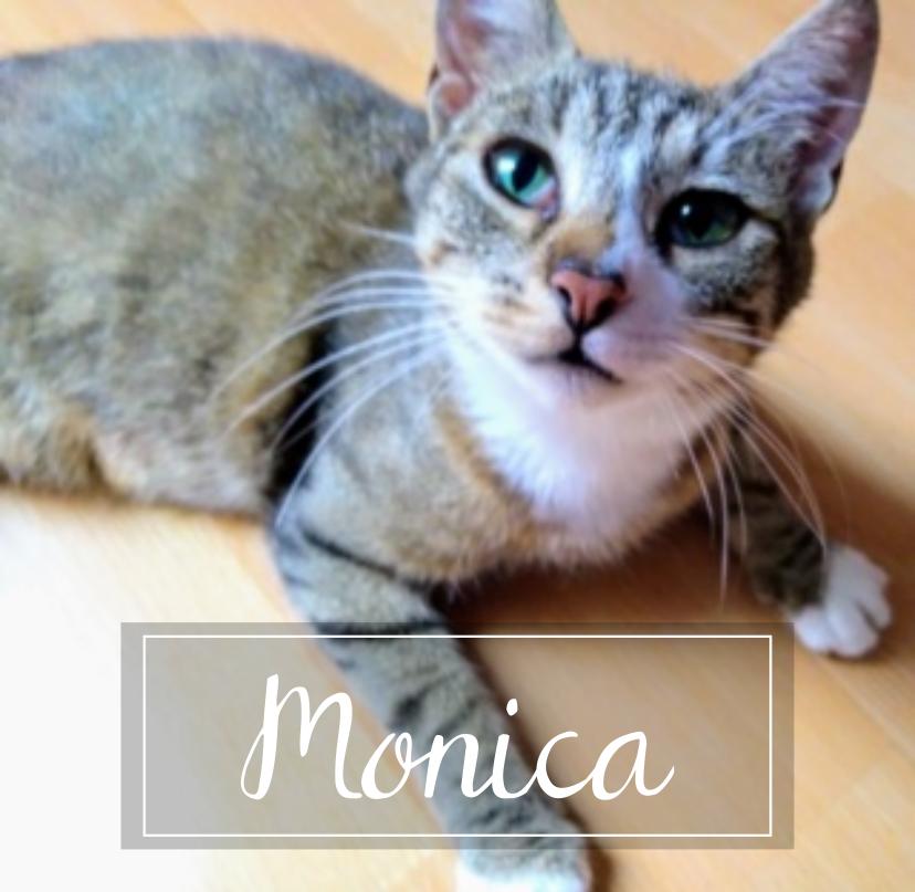 MONICA Monica10