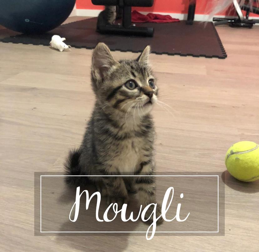 MOWGLI Mowgli10