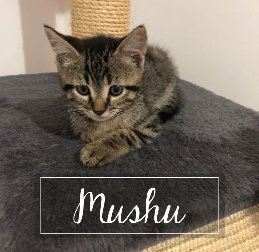 MUSHU Mushu110