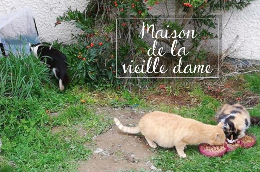 MAISON DE LA VIEILLE DAME Mvd10