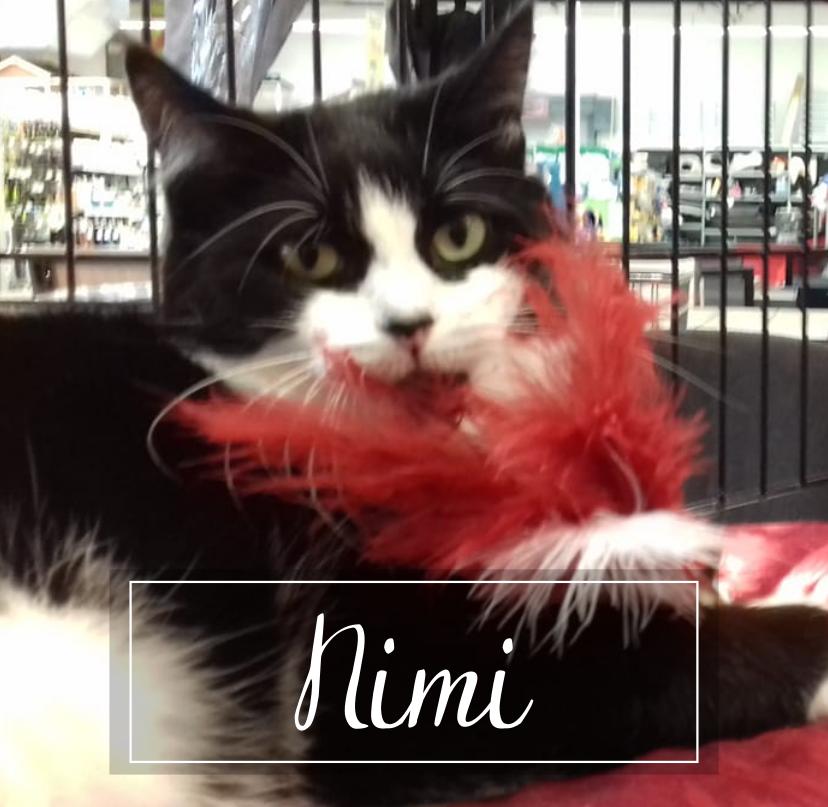 NIMI    - Page 2 Nimi1911