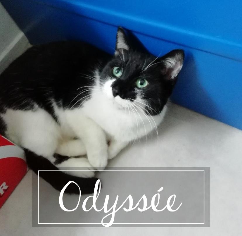 MAISON DE LA VIEILLE DAME Odysse10