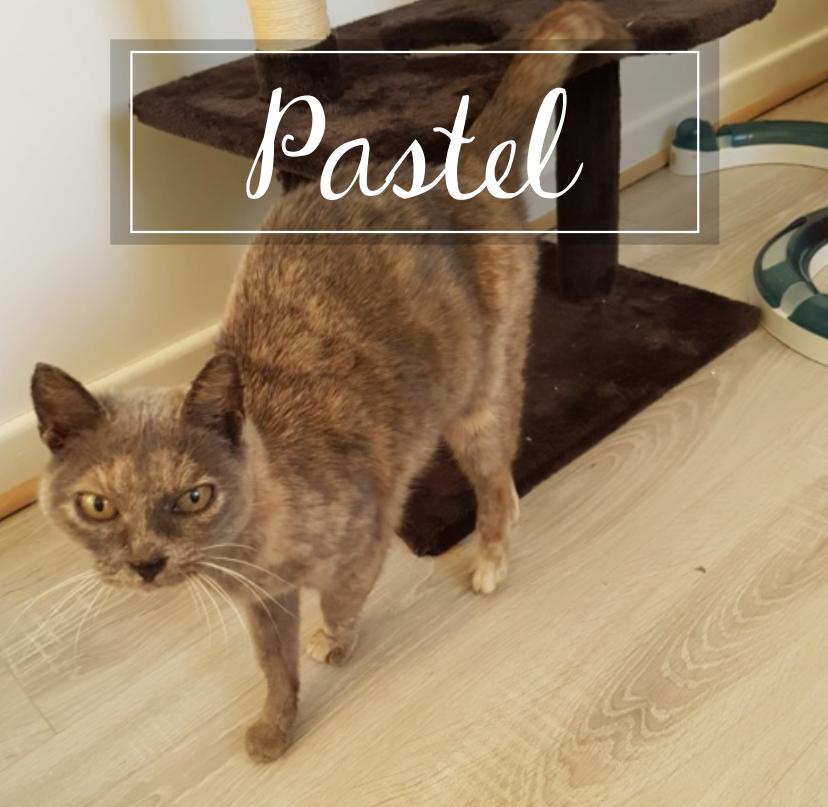 PASTEL Pastel10