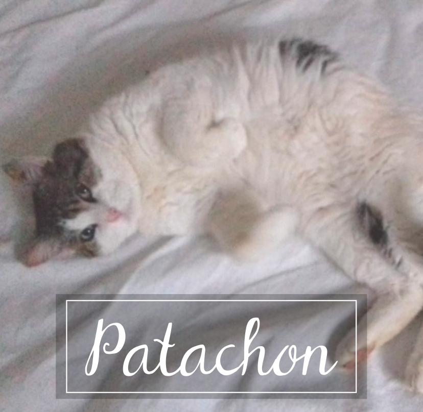 PATACHON - Page 2 Patach10
