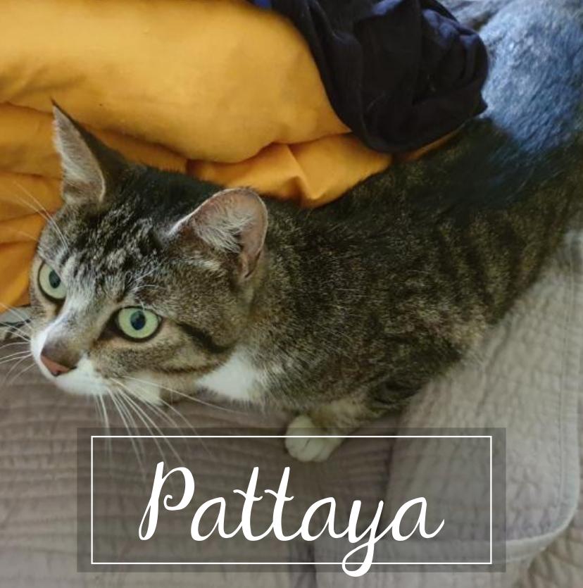 PATTAYA Pattay10