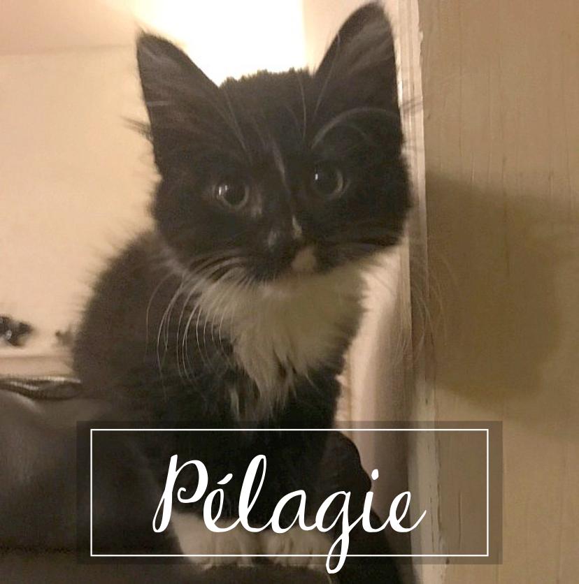 PÉLAGIE  Pelagi10