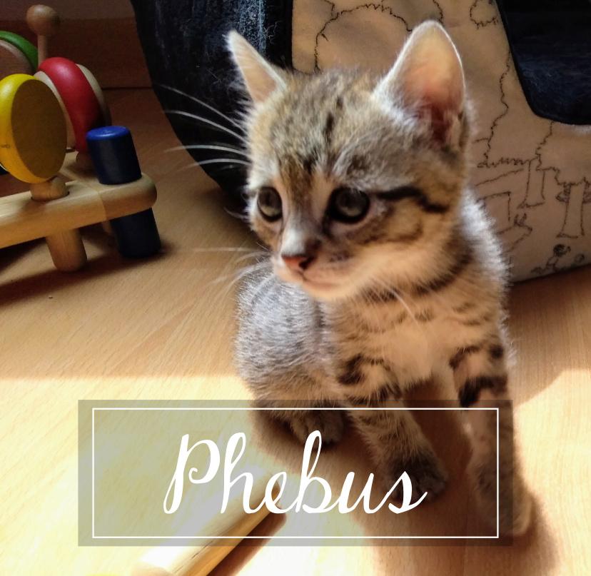 PHEBUS Phebus10