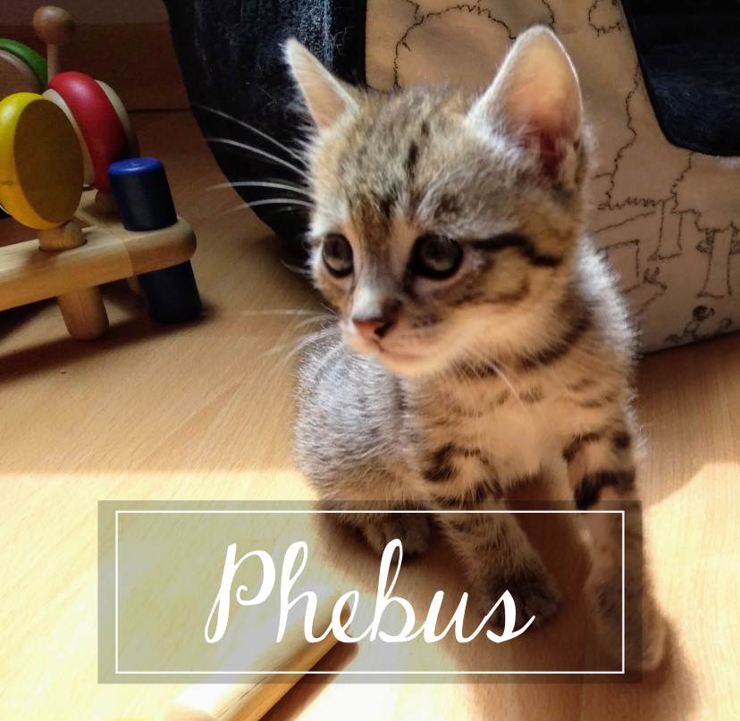 PHEBUS Phebus11