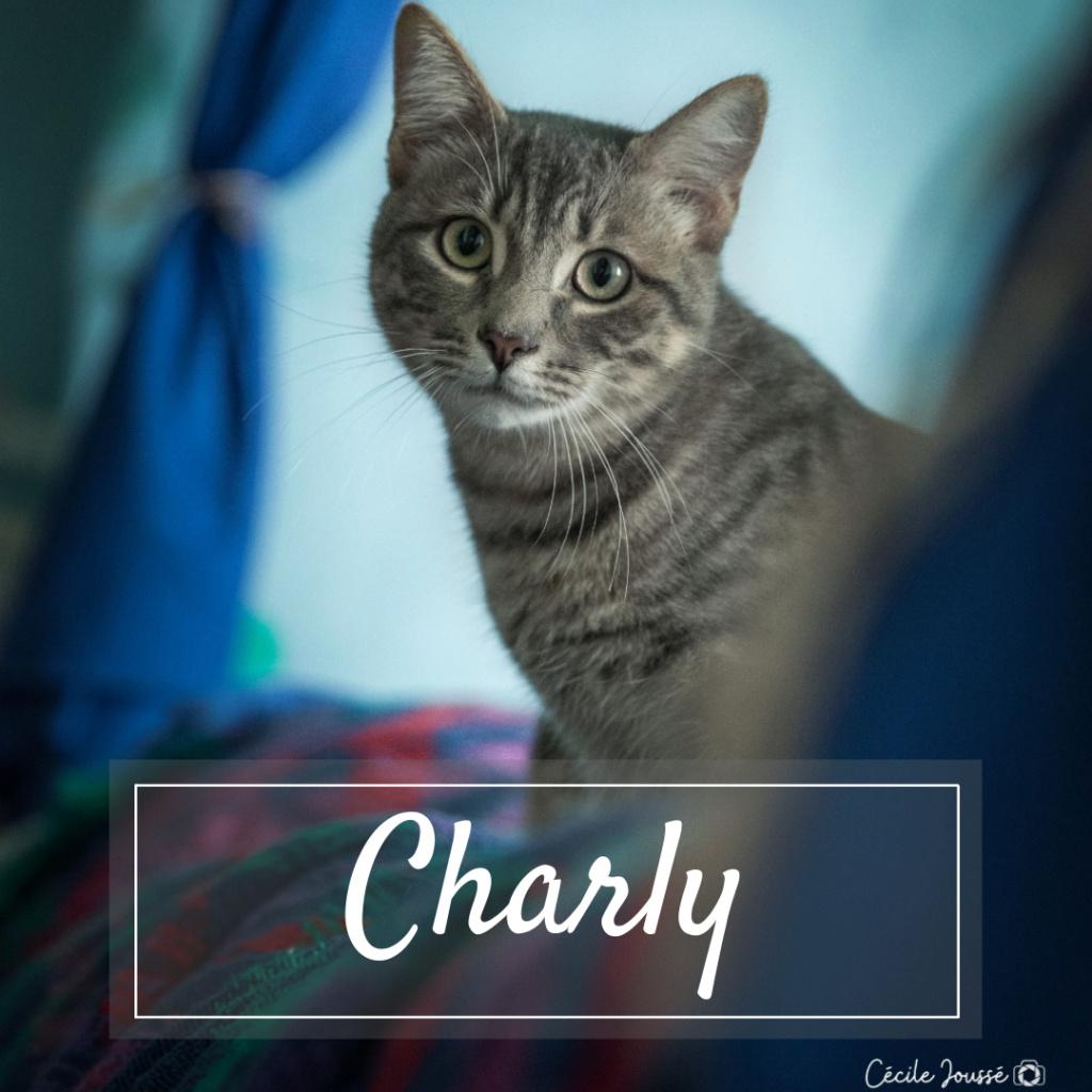 CHARLY Photo_13