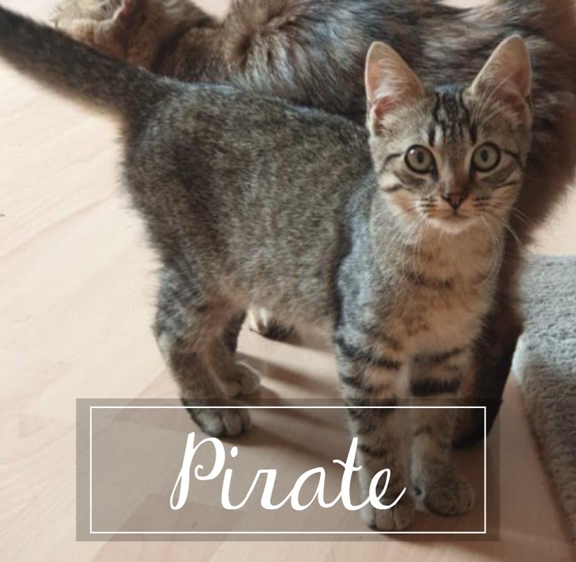 PIRATE Pirate10