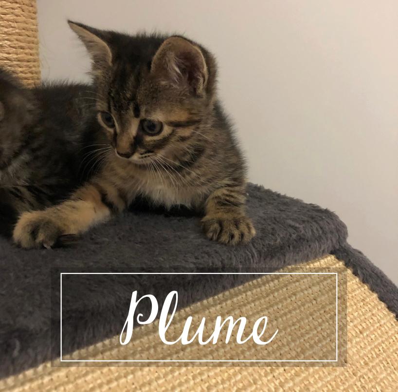 PLUME Plume110