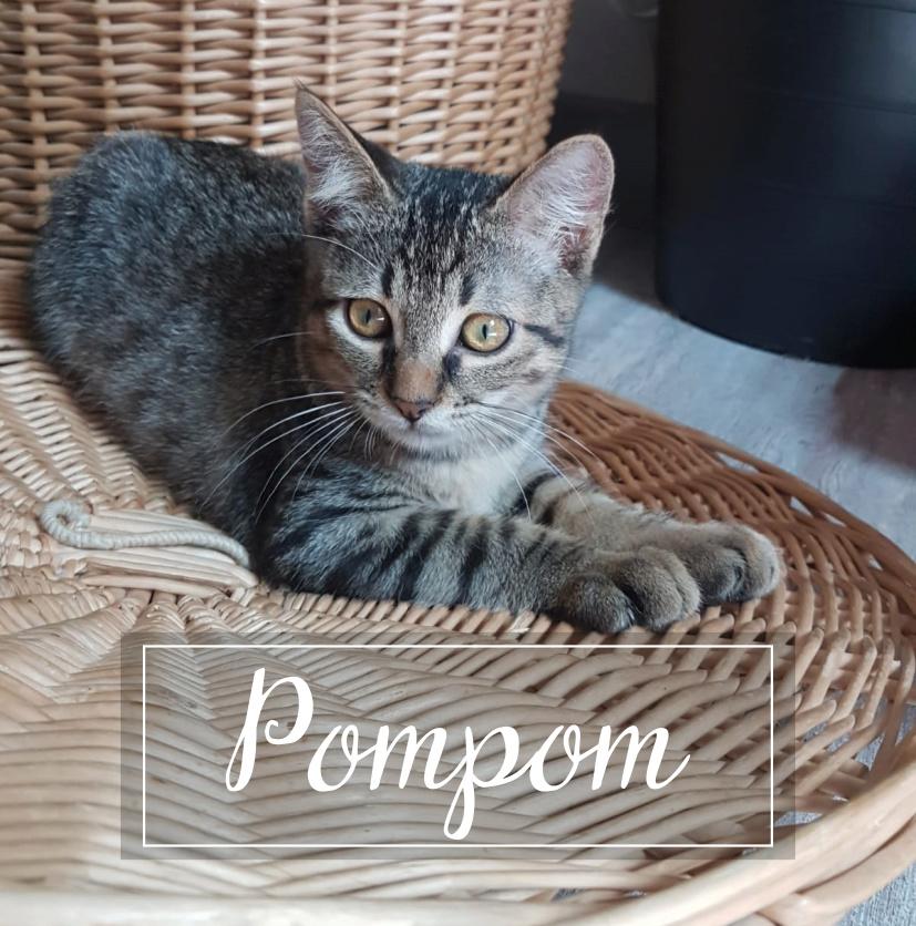 POMPOM Pompom12