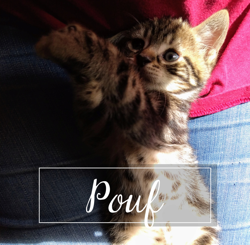 POUF Pouf1910