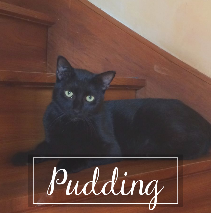 PUDDING Puddin11