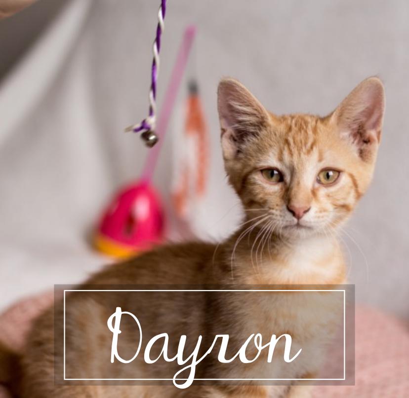 DAYRON Rect8210