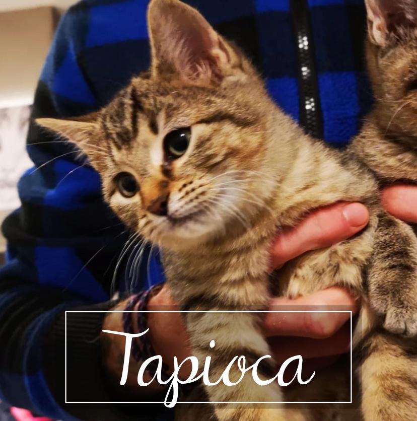 LA CHATVERNE  Tapioc11