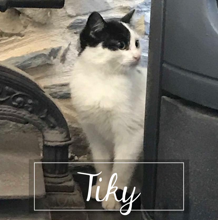 TIKY Tiky1911
