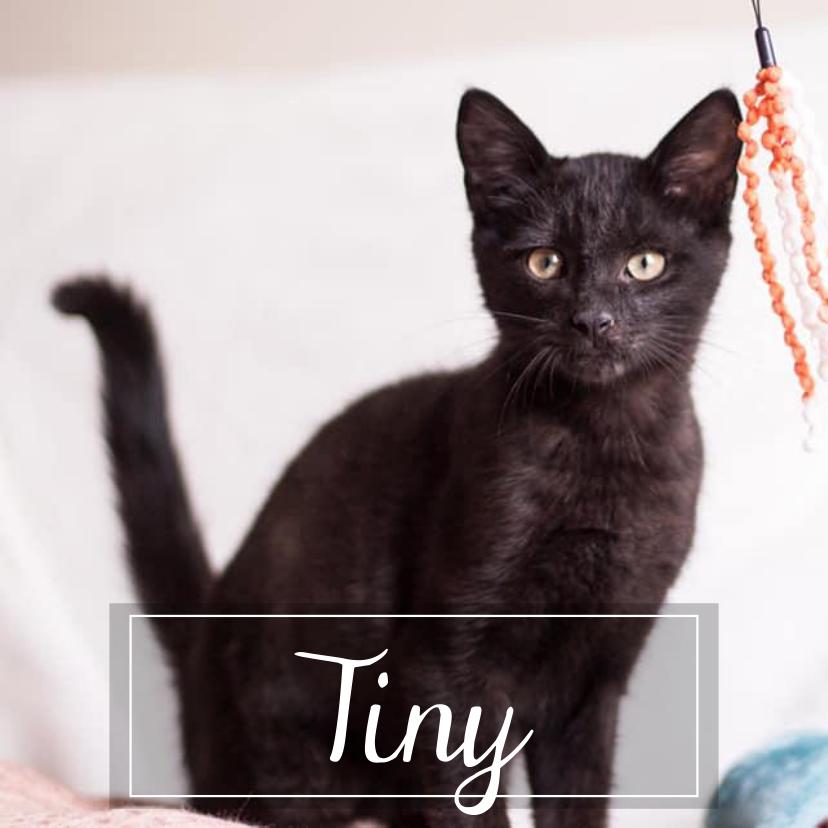 TINY & CAYDEN Tiny1912