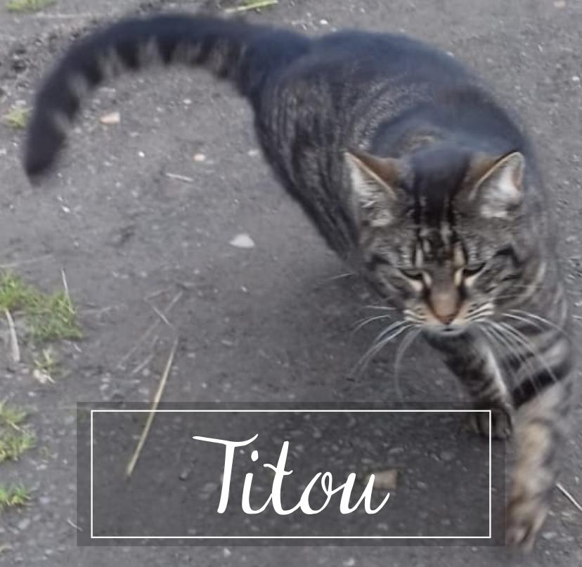 TITOU Titou110