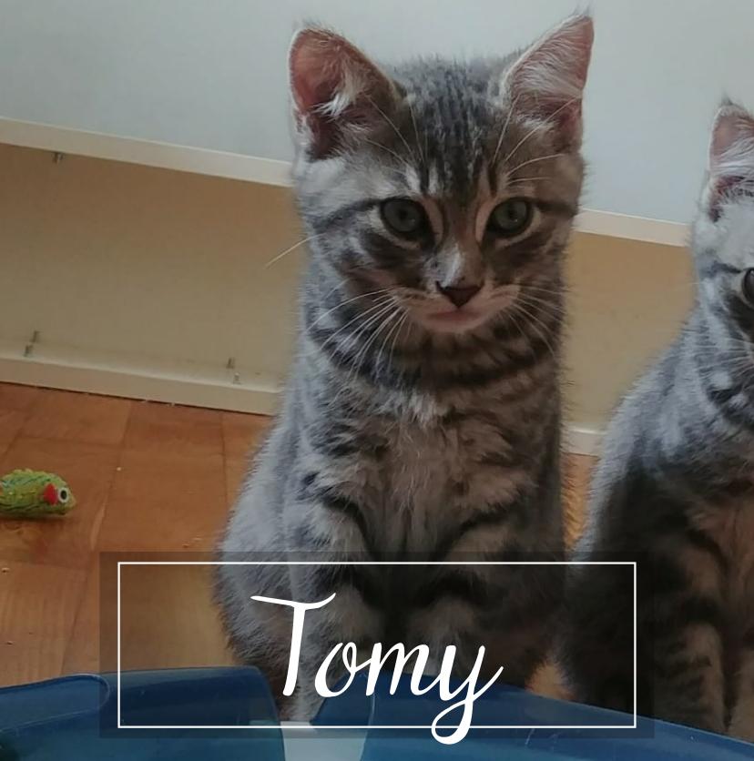CHARLY Tomy10
