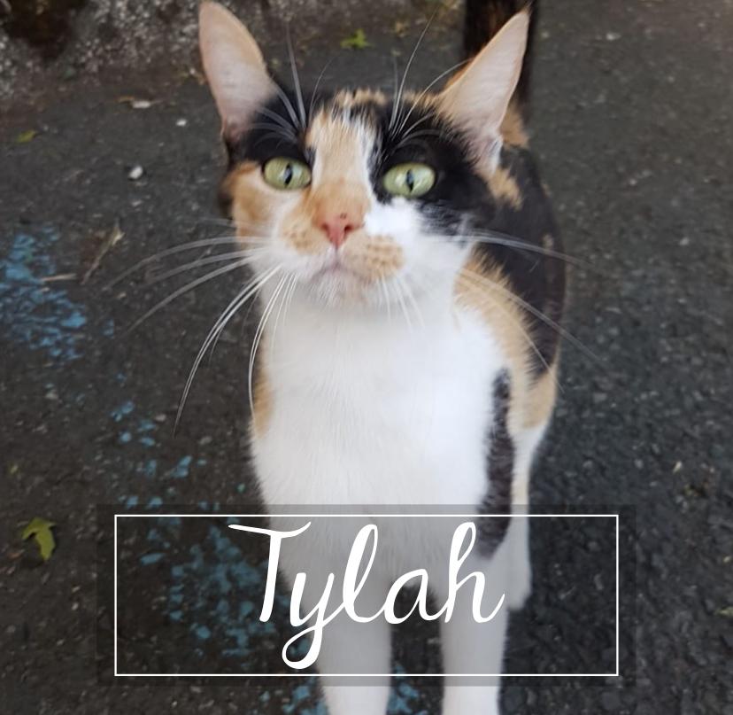 LA CHATVERNE  Tylah110