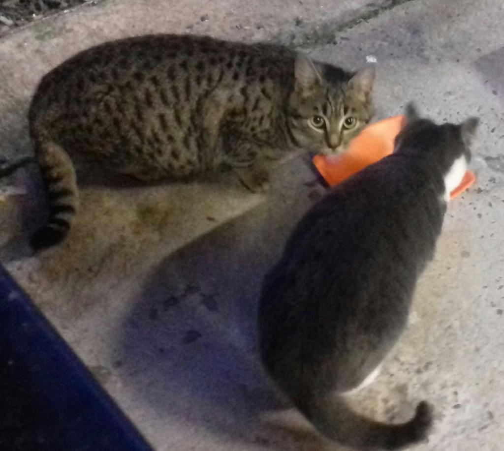 CAMPING CATS Whatsa41