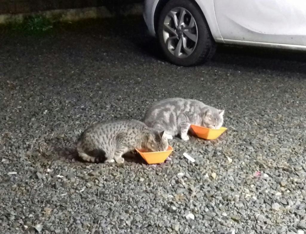 CAMPING CATS Whatsa42