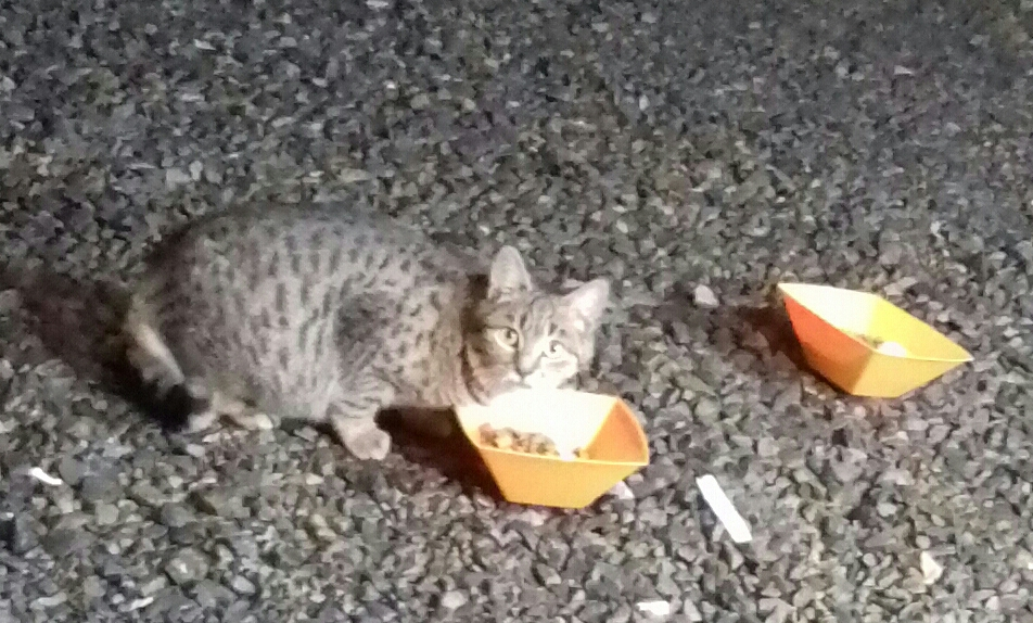 CAMPING CATS Whatsa43