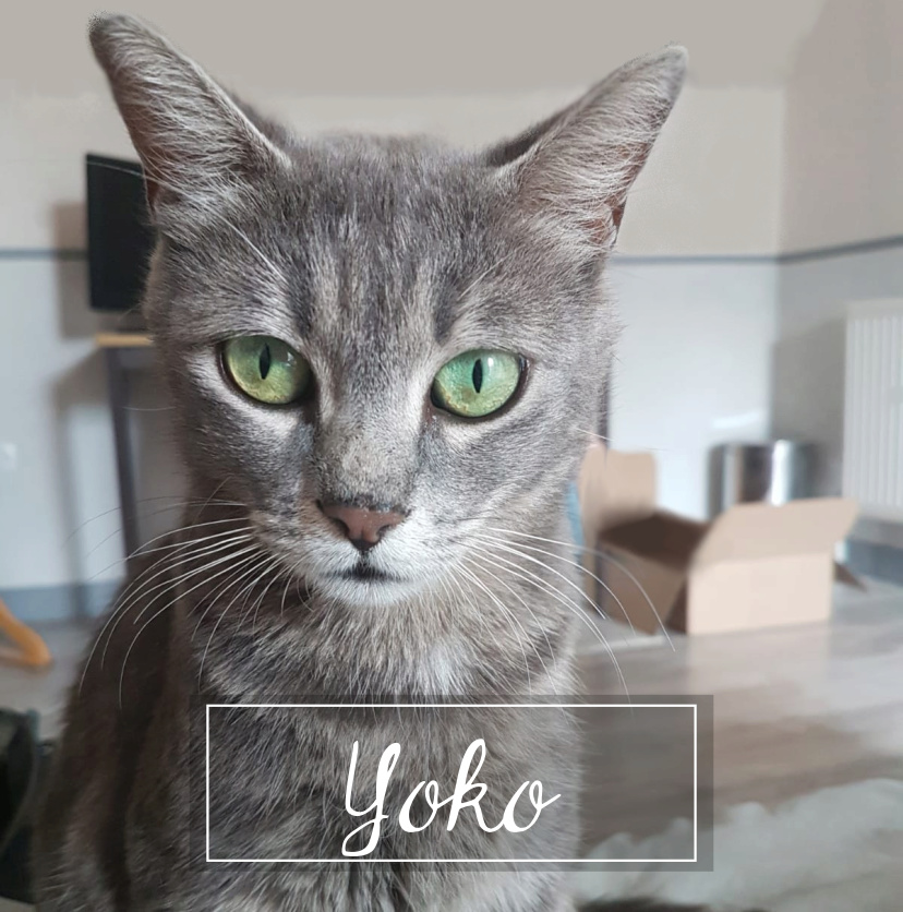 YOKO Yoko1910