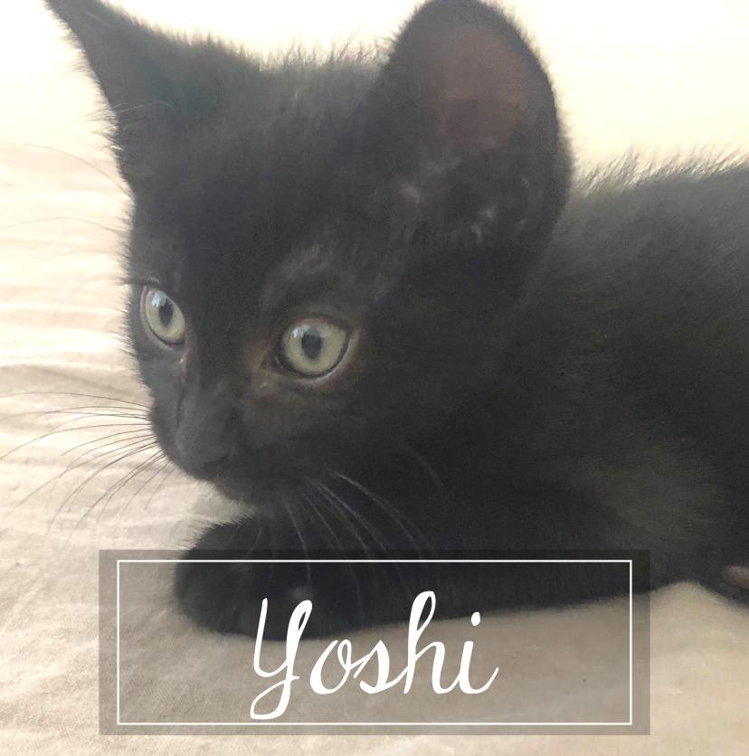 YOSHI Yoshiu10